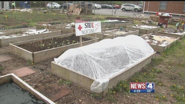 A community garden planted by SIUE students in East St. Louis. Credit: KMOV