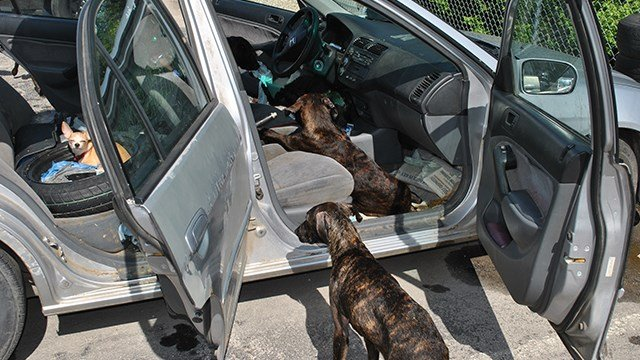 Police believe the 13 dogs were left in the car for nearly 8 hours Tuesday morning. (Credit: Ellisville Police)