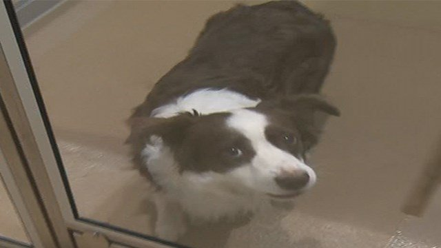 A dog at the St. Charles County Pet Adoption Center (Credit: KMOV)