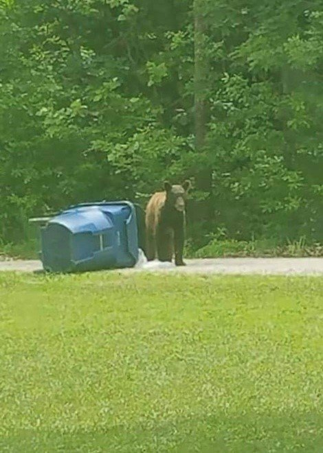 A black bear was seen digging in a trash can near Terre Du Lac in St. Francois County and is believe to be the same one seen several days later in a backyard in Jefferson County.