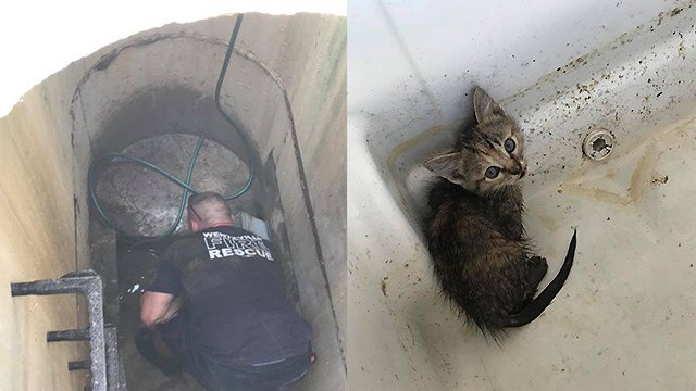 Wentzville fire crews were busy recusing a few kittens from storm sewer Tuesday afternoon. (Credit: Wentzville Fire Protection District)