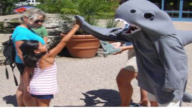 Come to the St. Louis Zoo dressed as a shark and you will get into Stingrays at Caribbean Cove for free! (Credit: St. Louis Zoo)
