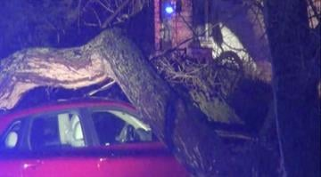 (KMOV) – Heavy winds caused a tree to topple on top of a car in Richmond Heights Wednesday morning. By Stephanie Baumer
