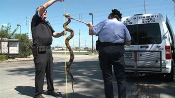 Customers got a whopper of a surprise when they spotted a six-foot-long snake at an East Moline Burger King. By WQAD
