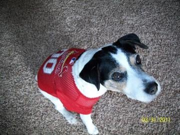 Rocky ready for Opening Day!!! Herculaneum, MO By Afton Spriggs