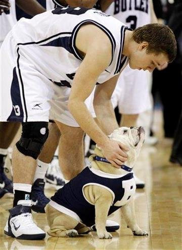 Butler's Chase Stigall rubs mascot Blue II after his team beat Virginia Commonwealth 70-62 at a men's NCAA Final Four semifinal college basketball game Saturday, March 2, 2011, in Houston. ( (AP Photo/Charlie Neibergall) By Charlie Neibergall