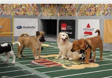 Jessie, Amy and Big Red playing in Puppy Bowl VII.  (PRNewsFoto/Animal Planet) By KMOV Web Producer