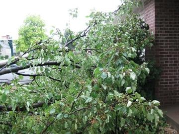 Viewer storm photo of a downed tree in Swansea, Illinois. By Bryce Moore