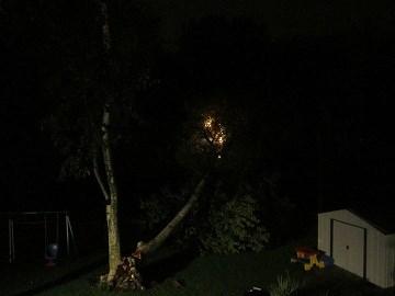Birch tree falls on blazing power line in Maryland Heights, Missouri. By KMOV Web Producer