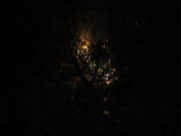 Birch tree falls on blazing power line in Maryland Heights, Missouri. By Picasa 3.0
