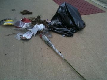 A trashbag tossed aside on a sidewalk leaves a lonely rose on a street in East St. Louis. By KMOV Web Producer
