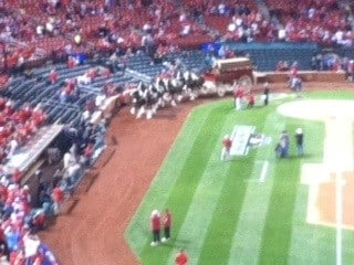 The Budweiser Clydesdales trot on the Busch Stadium warning track prior to NLCS Game 4 By KMOV Web Producer
