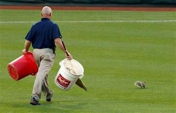 A Philadelphia Phillies grounds keeper chases a squirrel on the field before baseball's Game 5 of the National League division series with the St. Louis Cardinals Friday, Oct. 7, 2011 in Philadelphia. (AP Photo/Matt Slocum) By Matt Slocum
