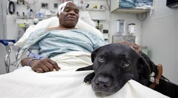 How a blind man survived being hit by a subway train.  The New York City man says his guide dog barked and tried to keep him from falling while witnesses called for help. By Carlos Otero