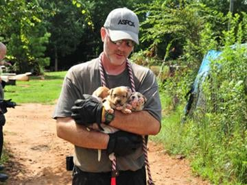 The Humane Society of the United States and the ASPCA are caring for the animals at undisclosed locations. By Belo Content KMOV