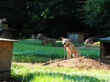 The dogs, ranging in age from just several days to 10-12 years, had been left to suffer in extreme heat with no visible fresh water or food. By Belo Content KMOV
