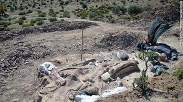The partially uncovered fossils can be seen in the area where they were discovered. By Stephanie Baumer