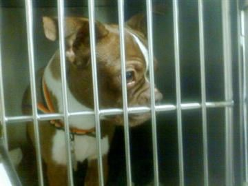One of 55 dogs rescued by the Missouri Humane Society By Afton Spriggs