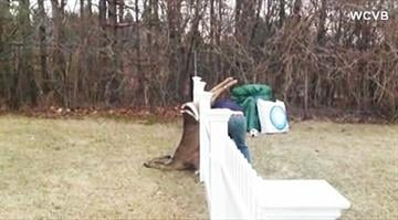 family works to free deer stuck in fence By KMOV Web Producer