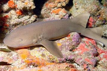 Nurse shark - Living exhibits photo By KMOV Web Producer