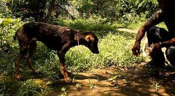 A five-month-old dog that fell into hot tar spilled around a construction site in northern India was eventually saved by a four-hour rescue operation animal welfare group, Animal Aid Unlimited said. By Stephanie Baumer