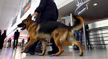 The Chicago Sun-Times reports the Customs and Border Protection dog named Shadow found the drugs on Monday. By Alexander Hassenstein