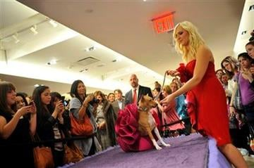 Marchesa co-founder and designer Keren Craig gives her dog Alabama a treat during a doggie fashion show at Bergdorf Goodman, Friday, Sept 10, 2010 during Fashion's Night Out during Fashion Week in New York. (AP Photo/Stephen Chernin) By Stephen Chernin