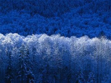 Winter Wonderland By Content Creator