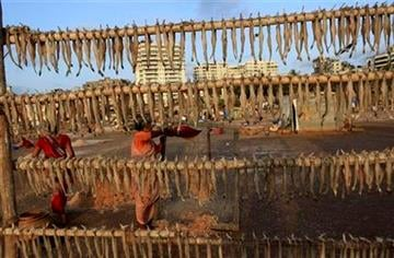 Fish hang on a bamboo fence to be dried, as fisherwomen clean fresh catch at a fishing colony in Mumbai, India, Friday, May 13, 2011. (AP Photo/Rafiq Maqbool) By Rafiq Maqbool