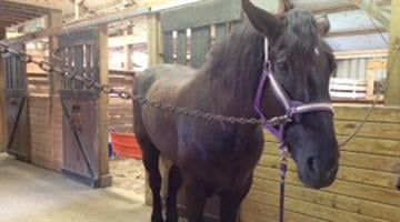 Police say Harry the horse is doing OK after he was stolen by a man in downtown St. Louis Tuesday night. By Belo Content KMOV