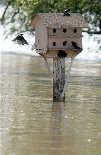 Flood water has not taken this bird house at Big Lake Village, Mo. Wild life could be seen all around the flood water Wednesday July 6, 2011. (AP Photo/St. Joseph News-Press, Jessica Stewart) By Jessica Stewart