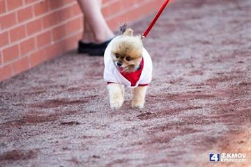 Hundreds came to Busch Stadium with their dogs to celebrate Purina's 10th Annual Pooches in the Ballpark. By Zach Dalin