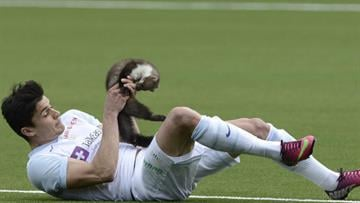Zurich soccer player Loris Benito has caught a marten during the Swiss Super League match between FC Thun and FC Zurich in the stadium in Thun, Switzerland, Sunday March 10, 2013. By AP PHOTO