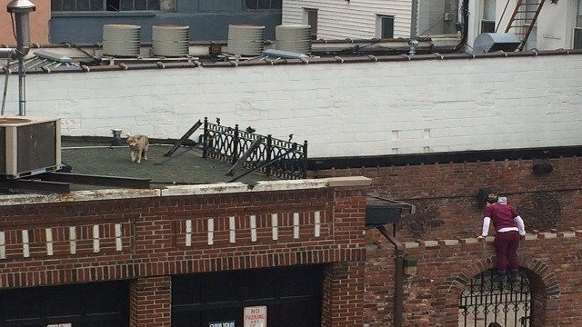 Matt Quigley was at his office when he saw what he thought was a dog on the roof of the garage of LIC Bar across the street. Turns out, a coyote was on the prowl.