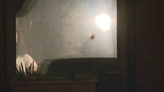 A home was hit with gunfire overnight in south St. Louis.