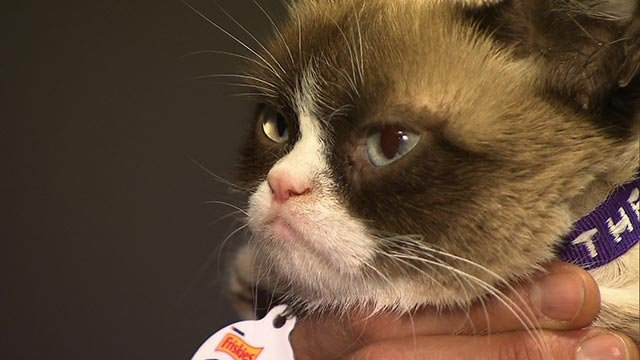 """(Credit: CNN) Tardar Sauce is a cat better known by her Internet name, """"Grumpy Cat."""""""