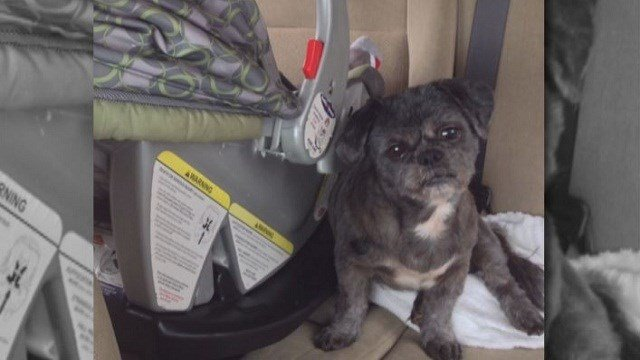 An Arnold woman's 9-year-old Shih Tzu named Bear died after escaping yard.