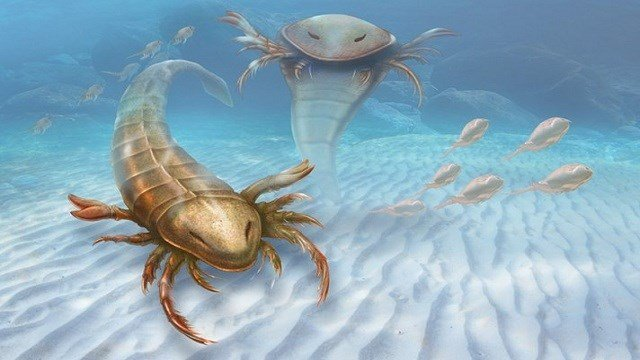 An artist's drawing of the Pentecopterus, a giant sea scorpion that lived 467 million years ago.