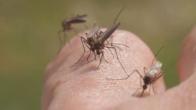 Some residents in Marissa, Ill. say they are concerned a blocked waterway is causing mosquito problems in their neighborhood.