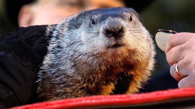 In this file photo from Feb. 2, 2011, Punxsutawney Phil, the weather predicting groundhog, is seen on his stump during the annual Groundhog Day festivities in Punxsutawney, Pa. (Credit: AP Photo/Keigh Srakocic/FILE)