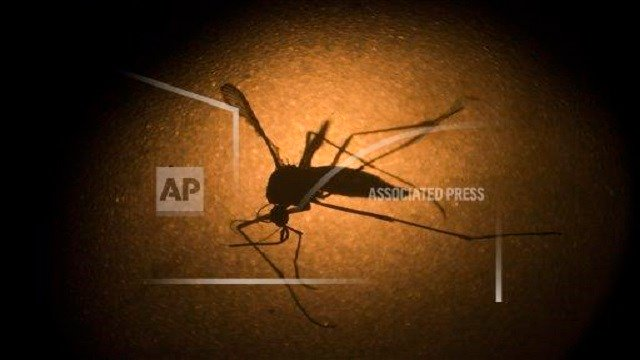 Zika virus (Source: AP Images)