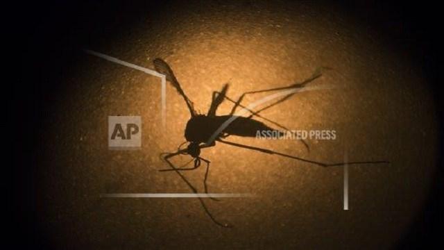 Zika virus (Source: AP Images)