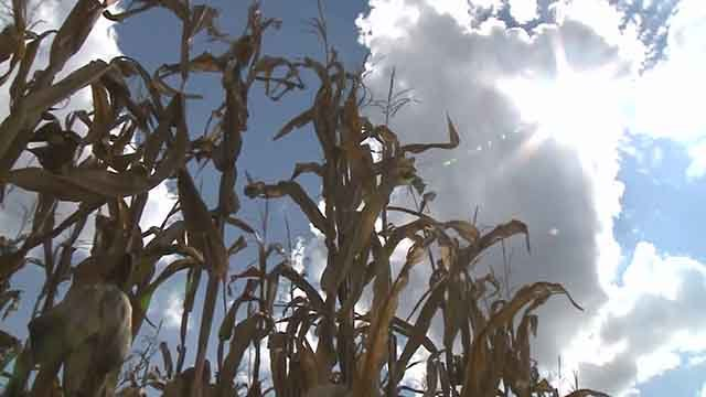 A drought is starting to hit farmers bottom line in Southern Illinois. Credit: KMOV